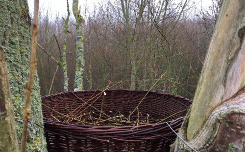 Nieuw nest