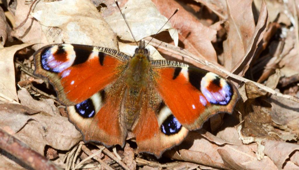 Vlinder- en libellenonderzoek